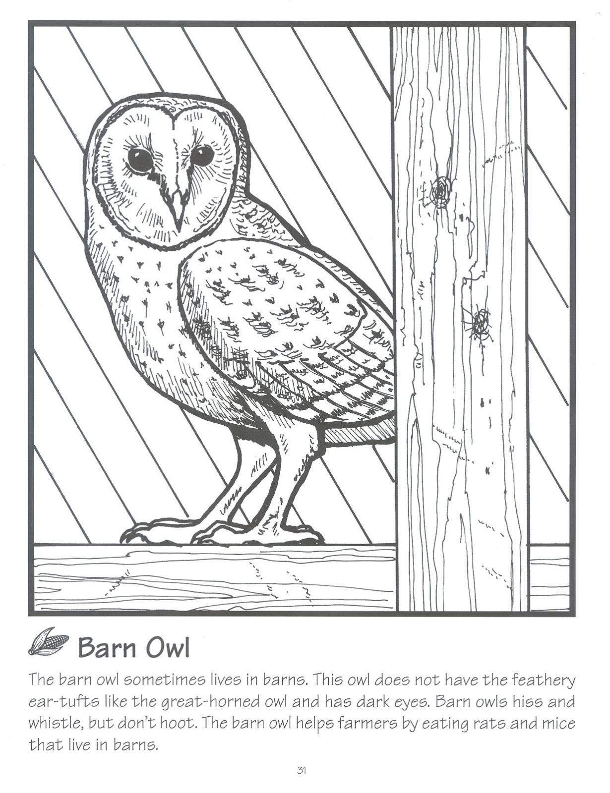 Coloring Pages Barn Owl Coloring Page usa npn booth at the 2014 tucson festival of books national coloring page barn owl
