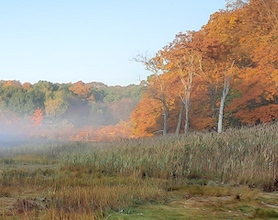 Landscape image showing mist rising of water in front of trees that have fall color.