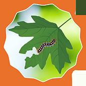 Pest Patrol badge