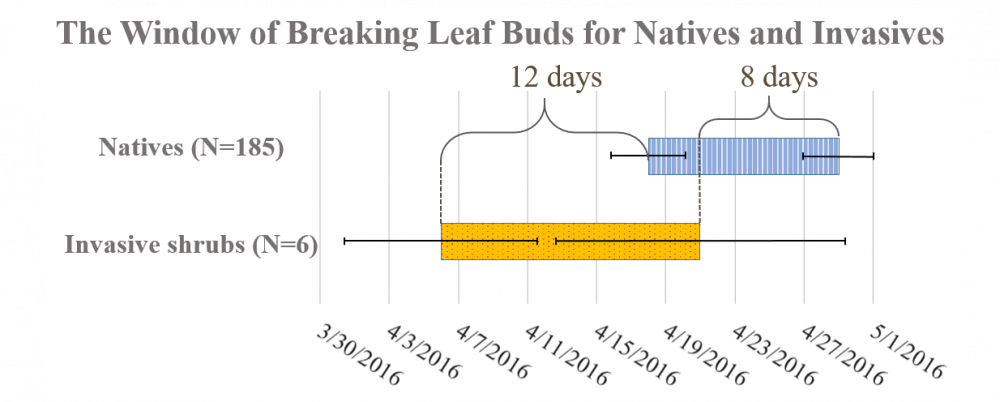 breaking leaf buds in invasives and natives Graph: Erynn Maynard