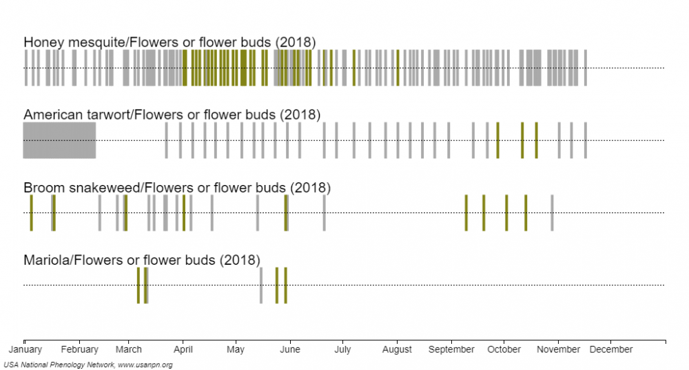 Southwest Season Trackers deciduous shrub flowering 2018