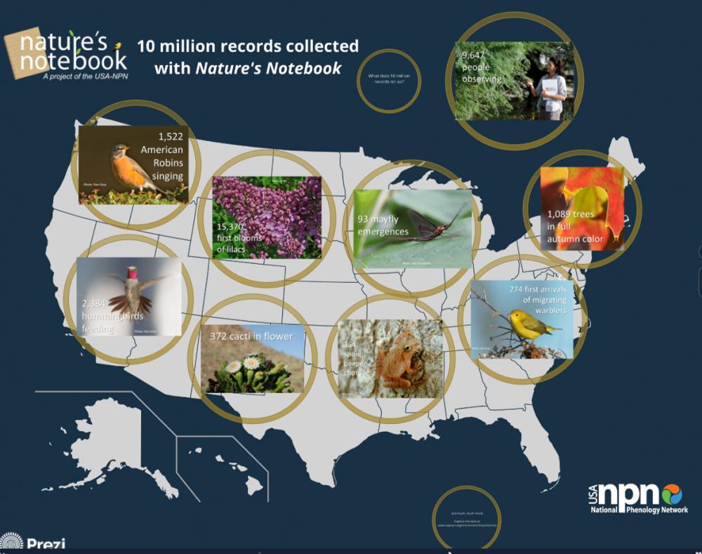 10 million records Prezi
