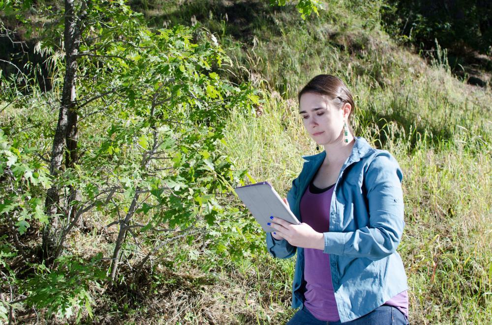 Observer with oak tree Photo Brian F Powell