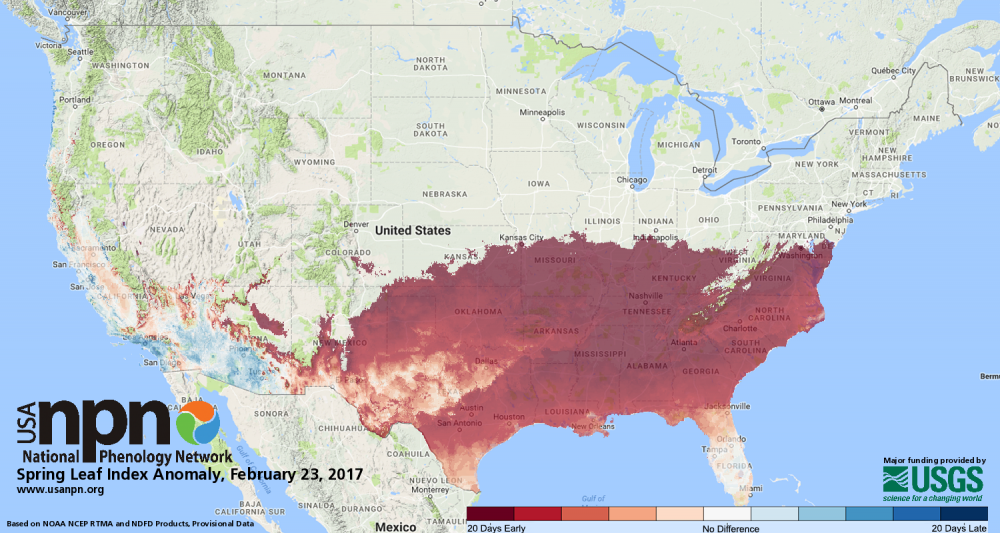 Spring Index leaf anomaly 2.23.2017