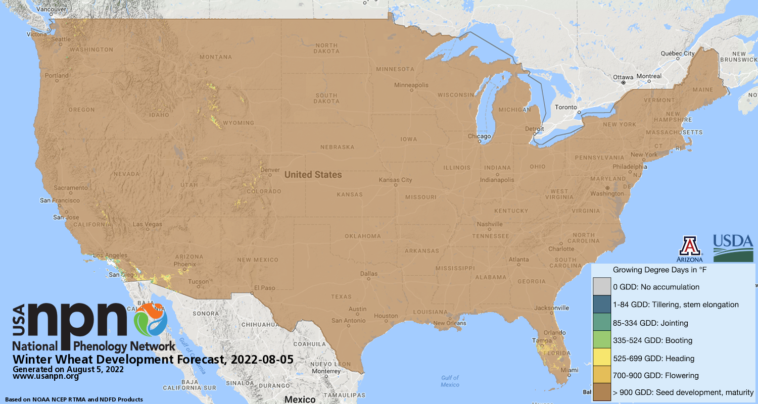 Winter wheat current day forecast