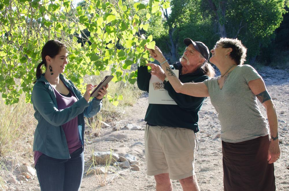 Observers with cottonwood tree, Mt Lemmon, AZ, Photo: Brian F Powell