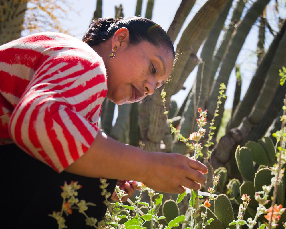 Woman observing flowers, Tucson, AZ, Photo: Brian F Powell
