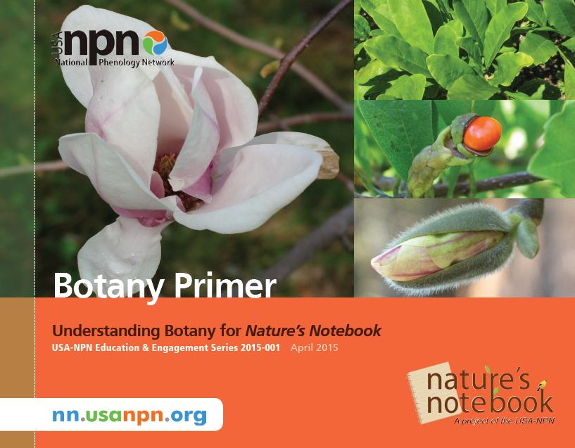 Botany Primer Cover