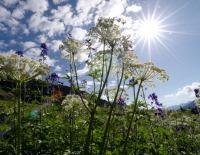 Flowers in sun