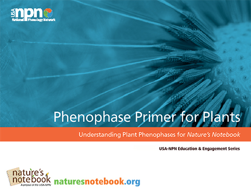 Phenophase Primer