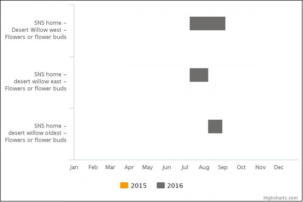 Phenology calendar desert willows