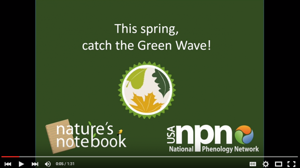 Green Wave Campaign video