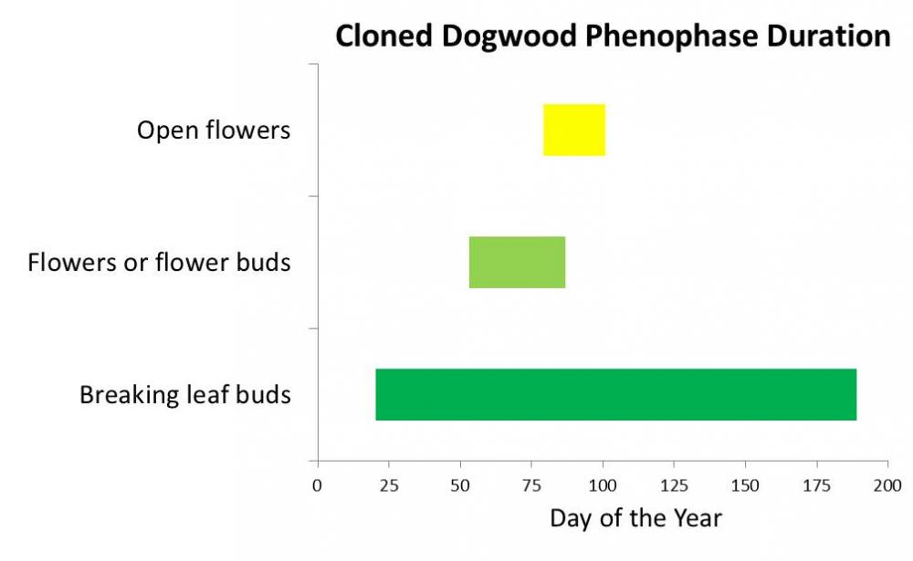cloned dogwood phenophase duration 2013