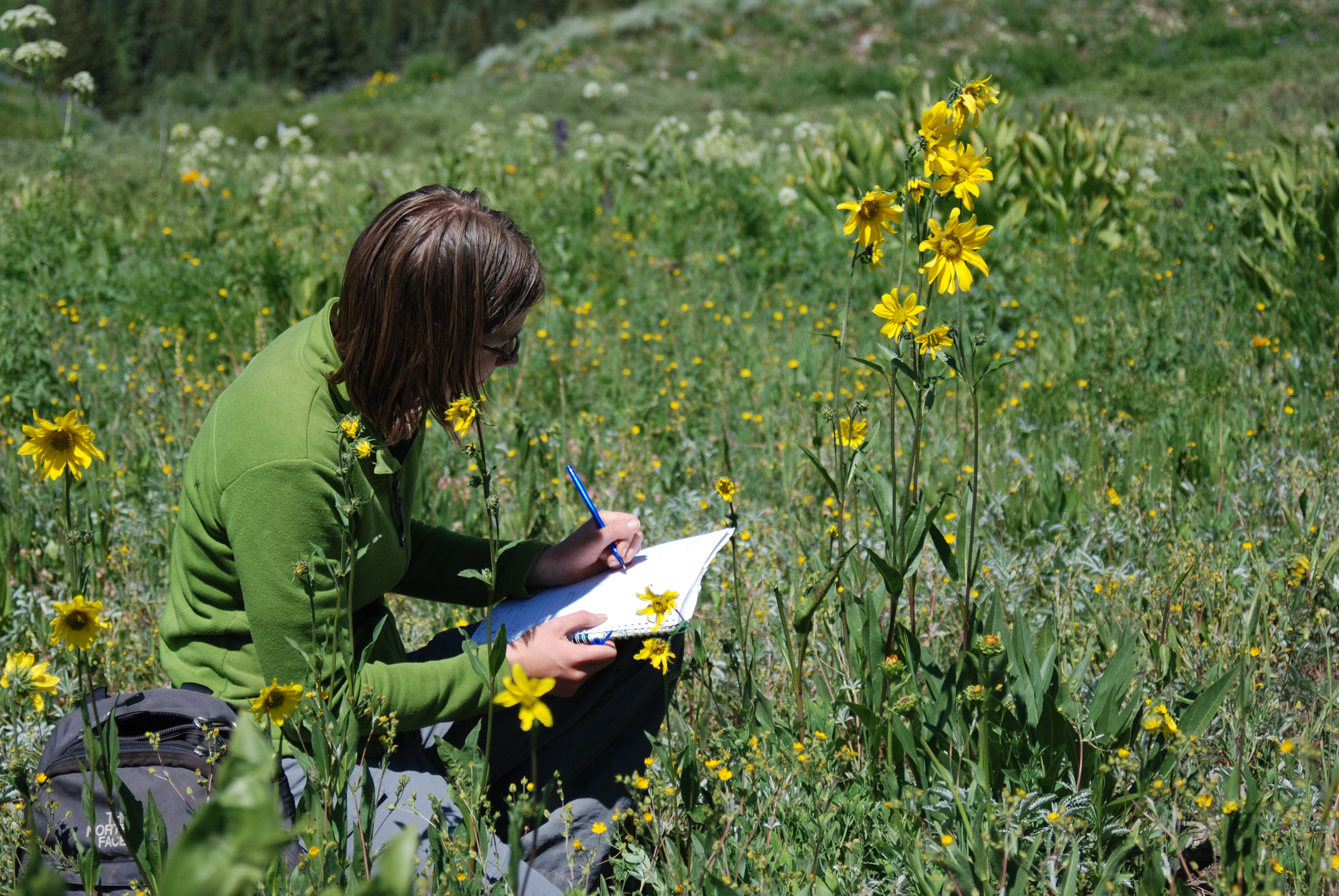 An woman seated in a field of wildflowers records observations