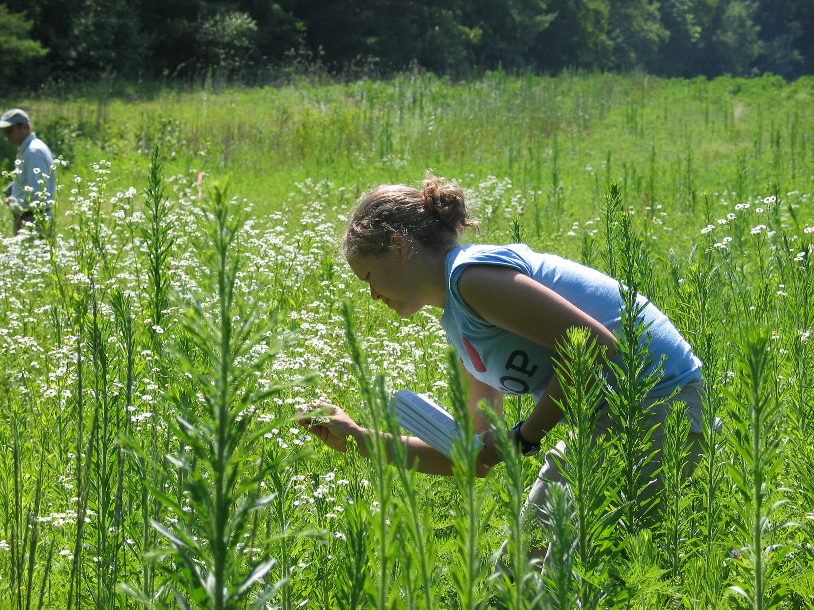 A woman examines flowers in a field, recording her observations