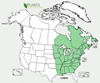 Distribution map for species Erythronium americanum
