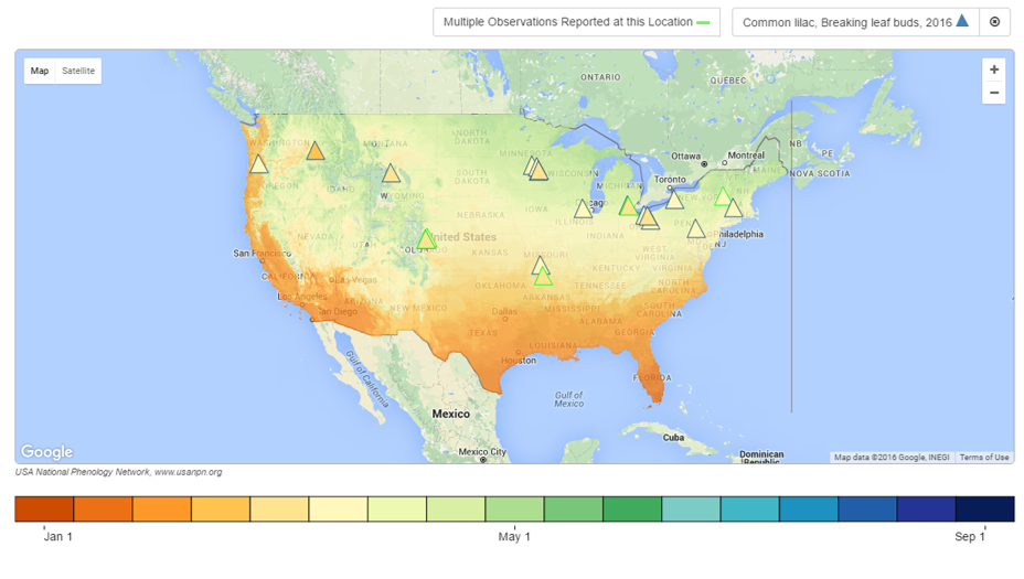 Phenology maps visualization