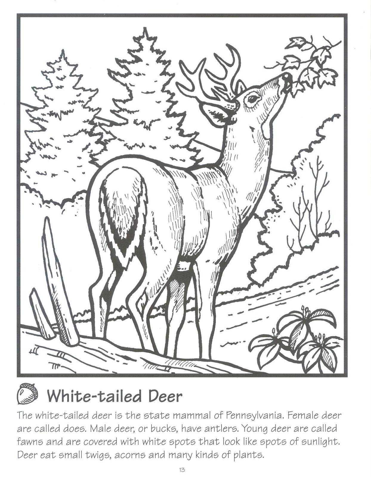 Coloring book landforms - Coloring Page Deer